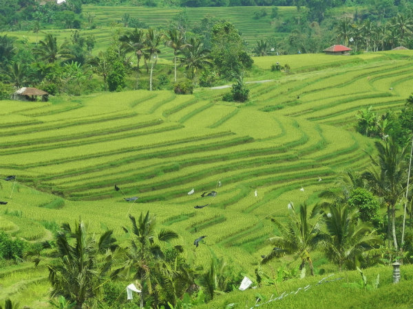 bali holiday packages jatiluwih